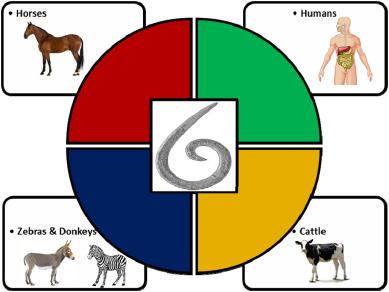 a paraziták szerepe az emberi életben