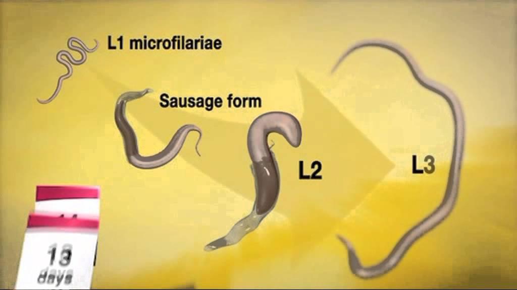 paraziták fantázia