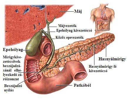 paraziták elleni gyógyszer az epehólyagban)