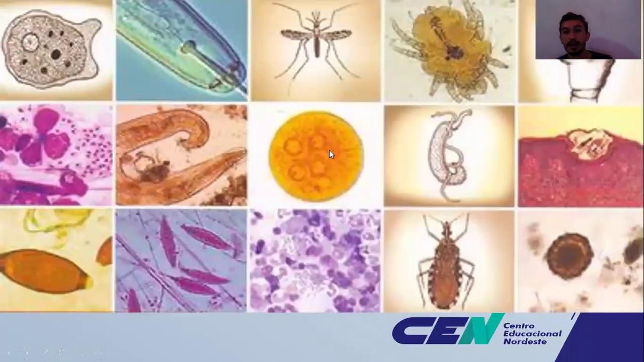 Megszabadult a paraziták felülvizsgálatától. Giardiasis tünetei és kezelése - HáziPatika