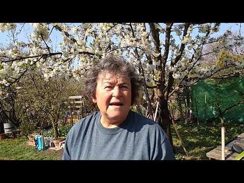 hogyan kell kezelni a fa parazitákat