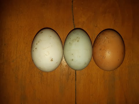 paraziták fekete tojása