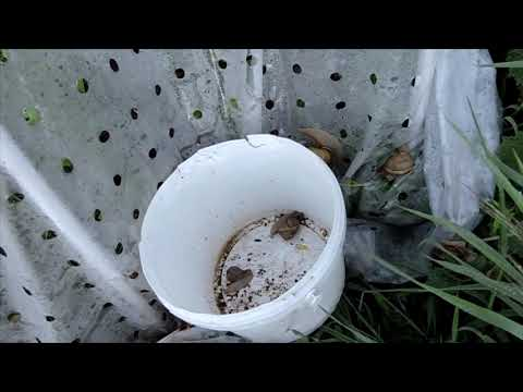 fekete borsó paraziták ellen aki megszabadult a paraziták felülvizsgálatától