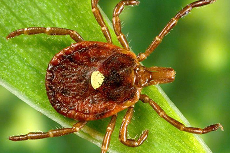 A paraziták leírása a székletben