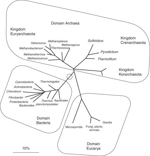 Spirochete halvány. A szifilisz - halvány treponema okozója - Betegségek És Állapotok -