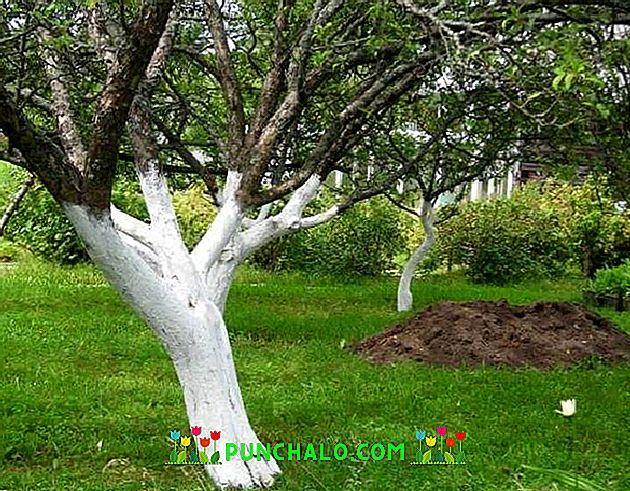 Ültetés, metszés, permetezés, szüret - időpontok - Gyümölcsfák ápolása - Profi kertész