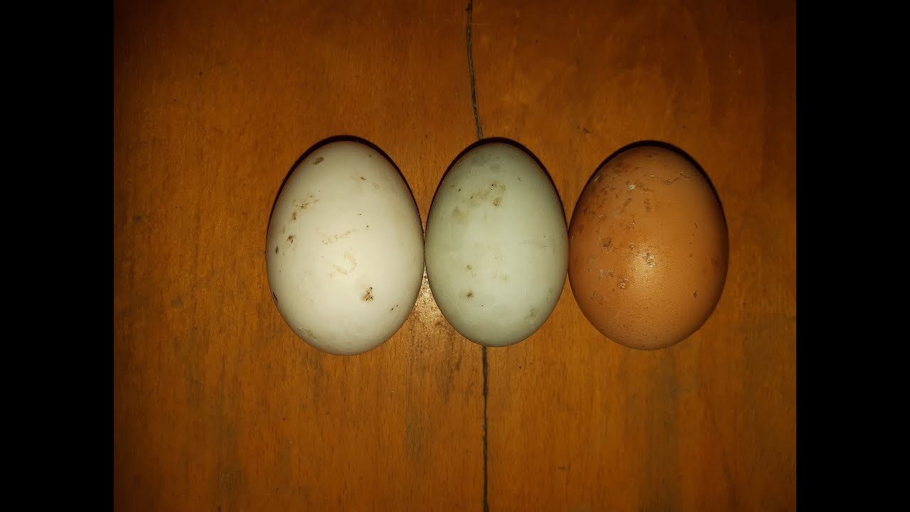 Szálak egy felnőtt székletében - A pinworm tojás érlelődik