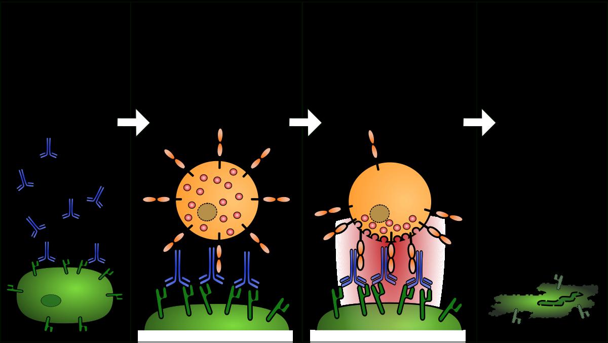 a pinwormok elpusztulnak- e a hőmérsékleten