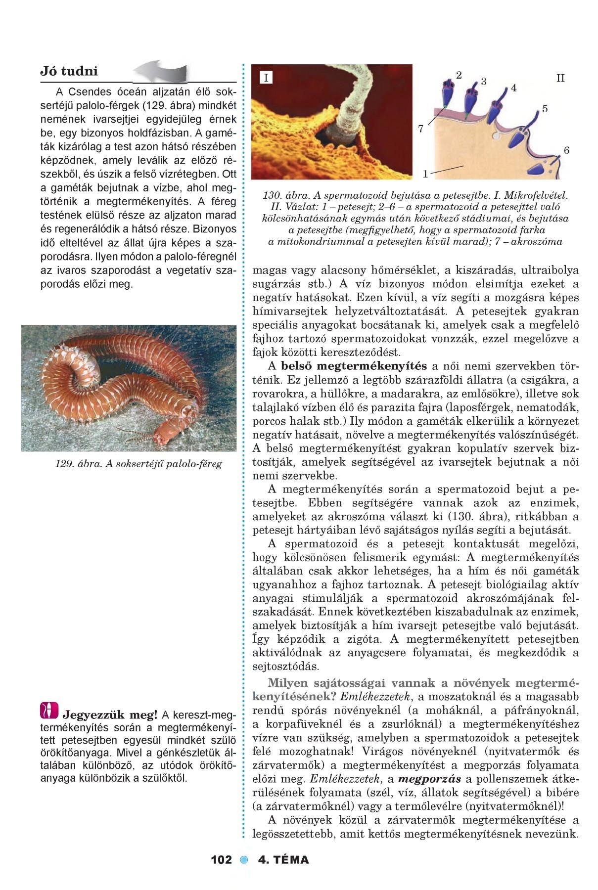 Paraziták jelentése WikiSzótáegry-keszthely.hu - Eljuttat a megértésig!