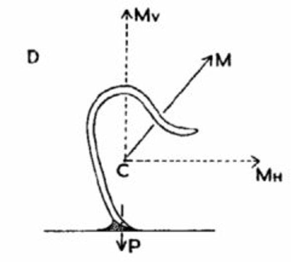 pinworms életciklus- diagram