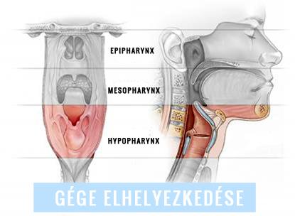 helminták kezelése gv vel giardia mensen symptomen