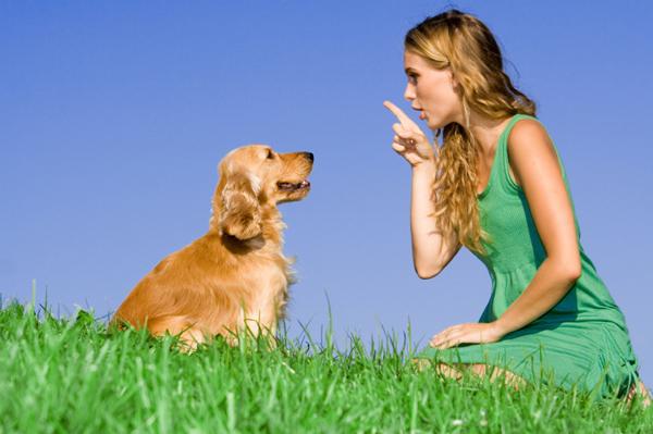 Miért szagol rosszul a szám, A légzés és a légzési ráta kutyáknál