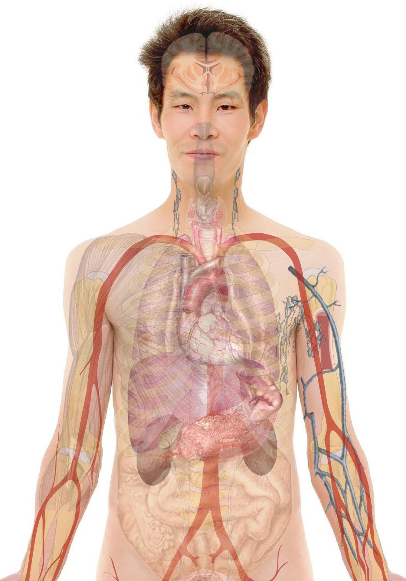 a belső szervek emberi parazitái