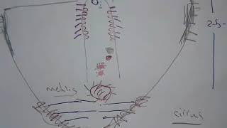 fgds rossz lehelet paraziták a gyomorban hogyan lehet tudni
