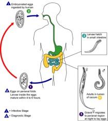 paraziták az emberi bőr tünetei alatt parazitaellenes tinktúra vélemények