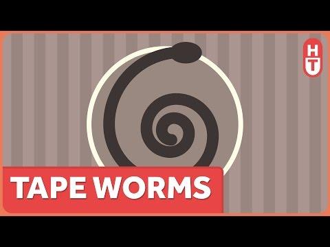 Paraziták anyós-szöveg