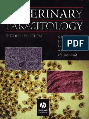 Tojások enterobiosis. Hogyan tesztelik az enterobiosist?, Tojást tojó pinwormok