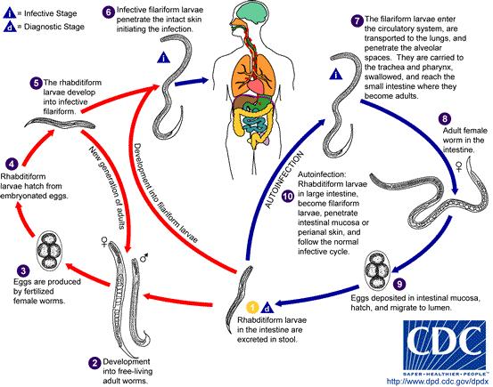 Fascioliasis életciklusa, A cikk orvosi szakértője