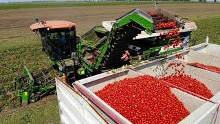 Az uborka termesztése házikertben - Zöldségek - Konyhakert