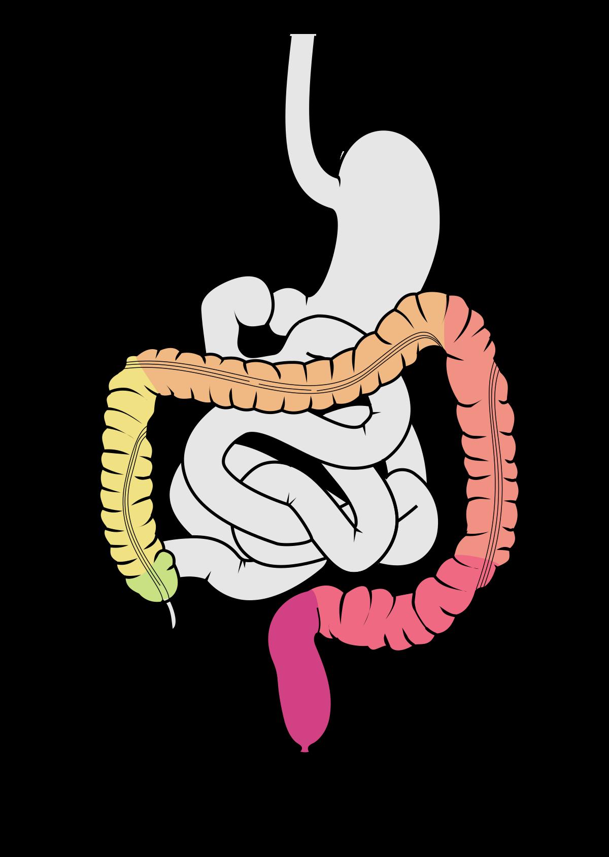 galandféreg jelei az emberi testben a coch pálca parazita