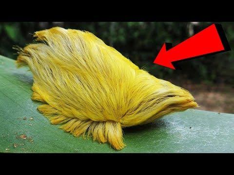 példa a természetben élő parazitákra