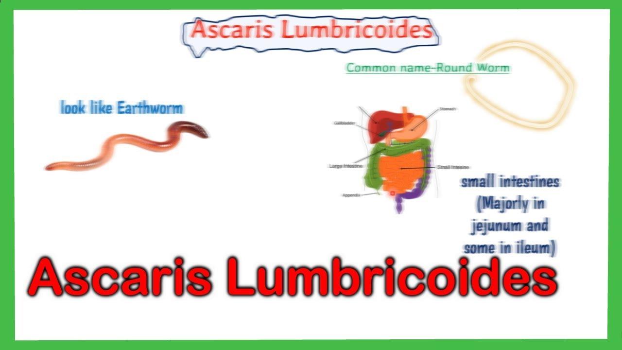 Ascaris urticaria - Meddig tart a férgek gyermekeinek kezelése