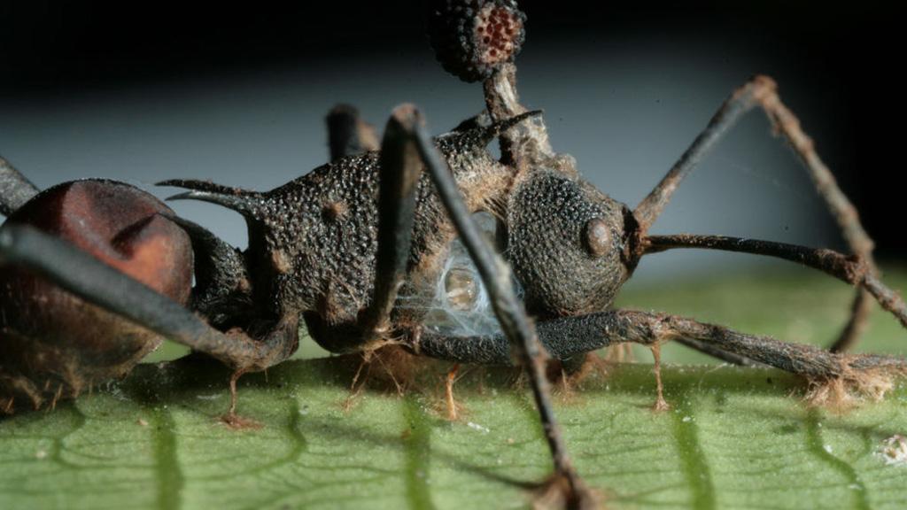 a paraziták megeszik az embert