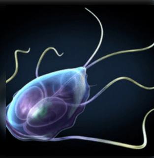a paraziták testben való jelenlétének mutatója)