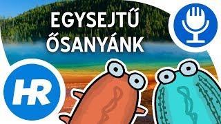 a parazitákról az orvos férfiaknál)