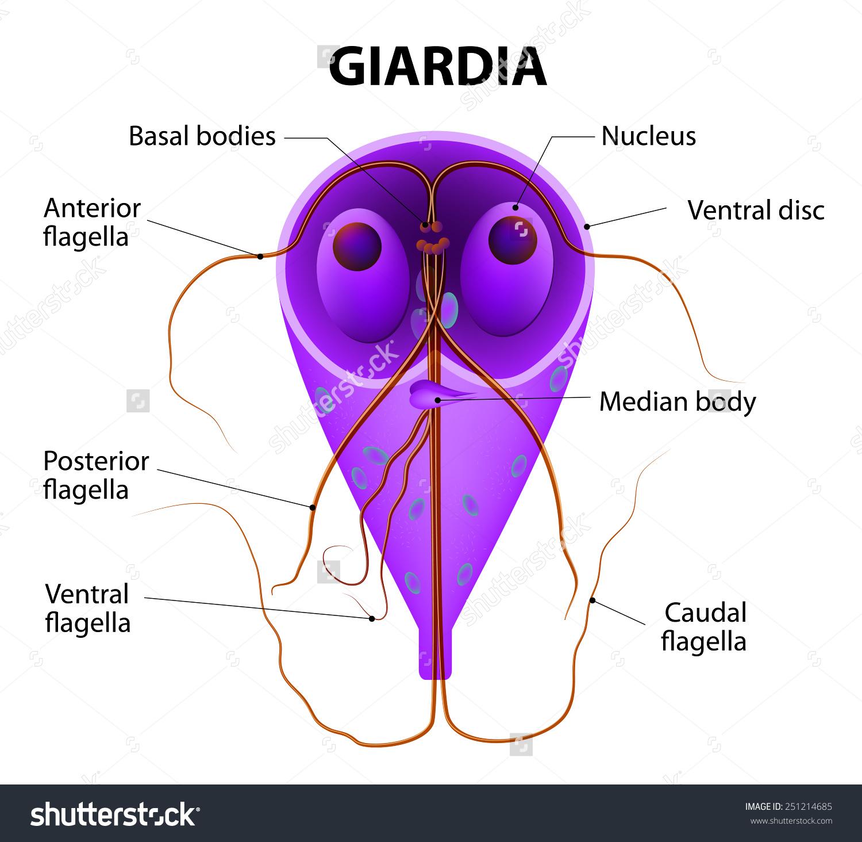 másodrendű parazita