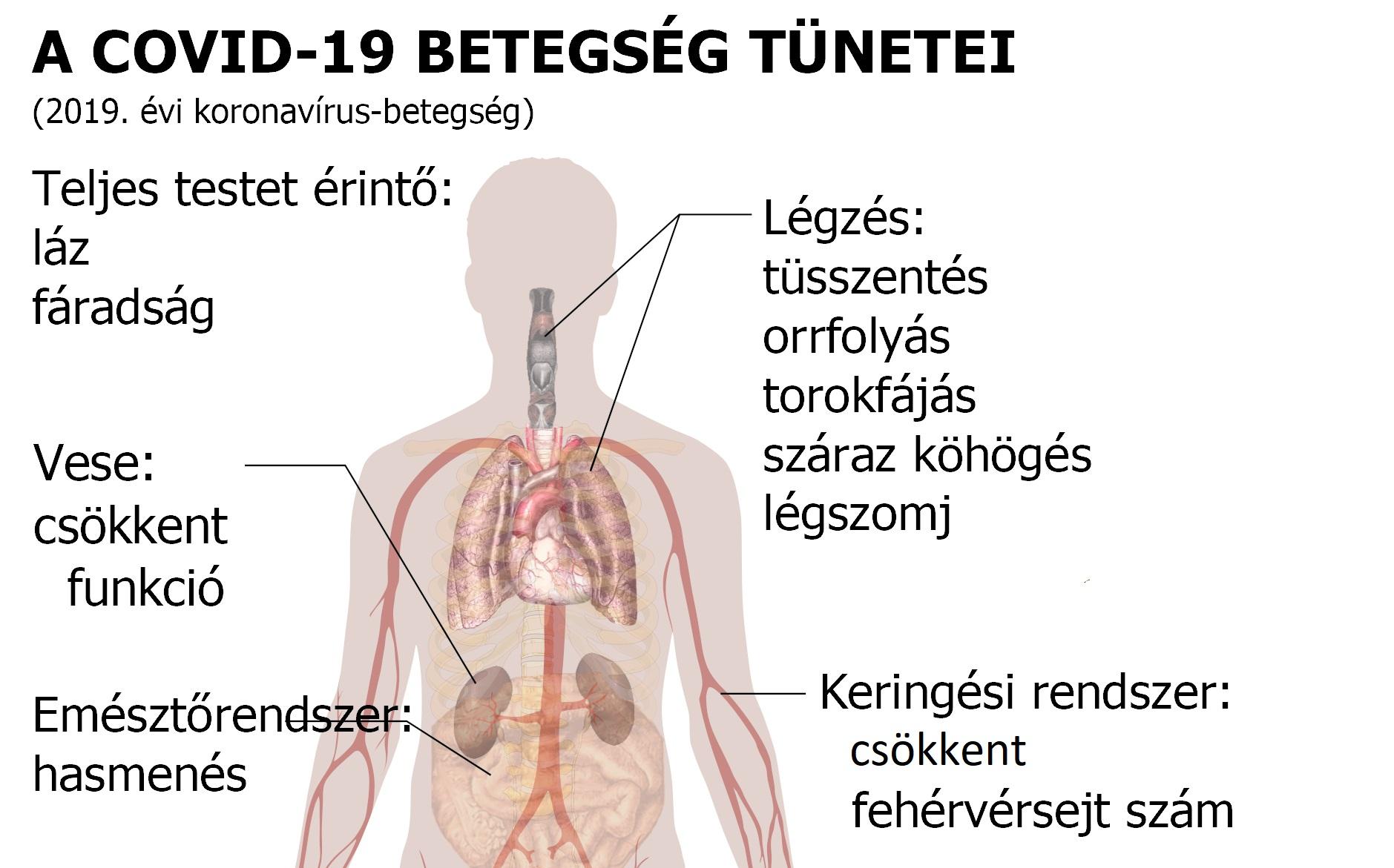 Az emberi test parazitáinak kezelése és tünetei