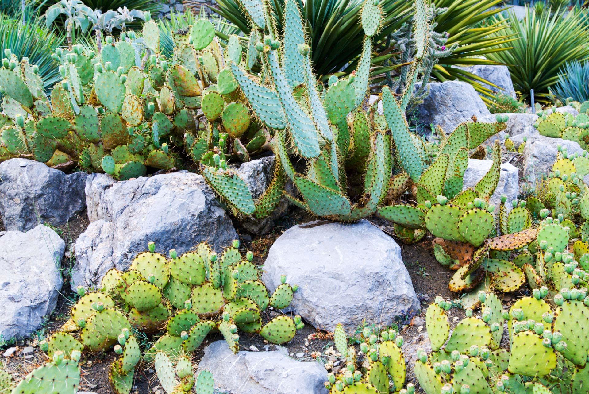 Dísznövény, kert, dekoráció