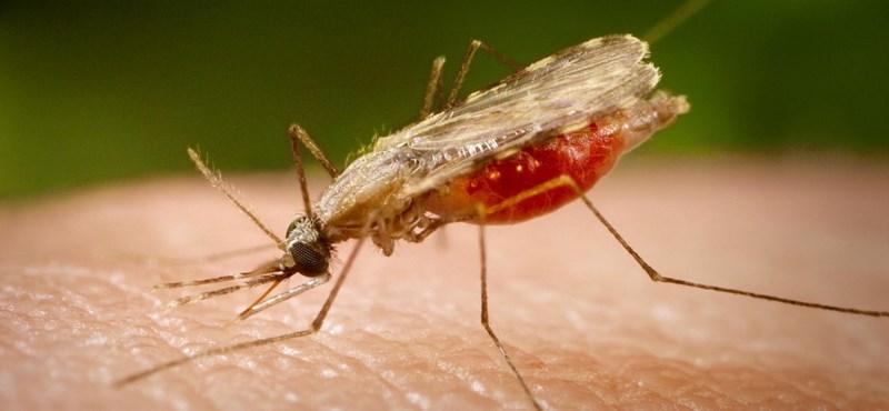 paraziták irányítják az elmét legjobb pinworm gyógyszerek