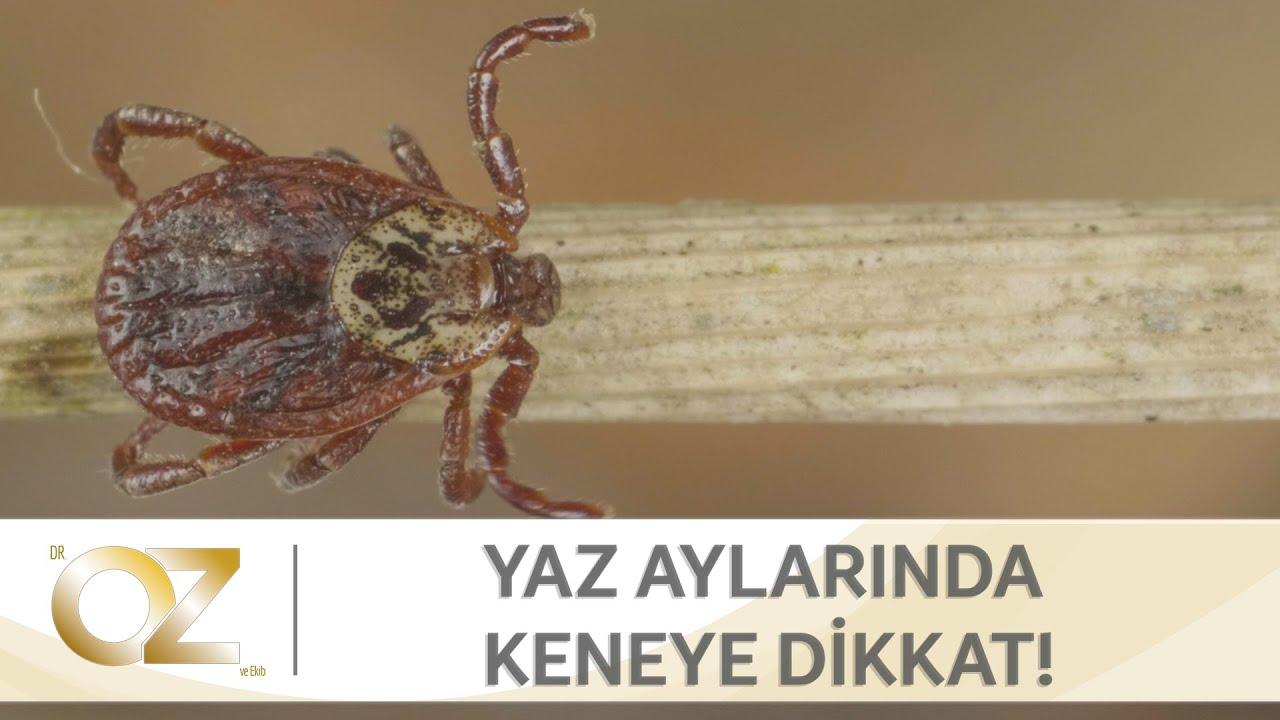 paraziták a lamblia ürülékében)