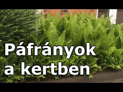 páfrány hím parazitáktól)