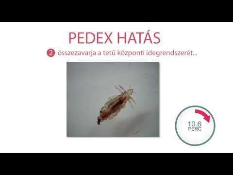 paraziták nagyításban