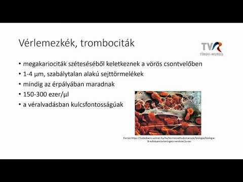 vérlemezkék paraziták)