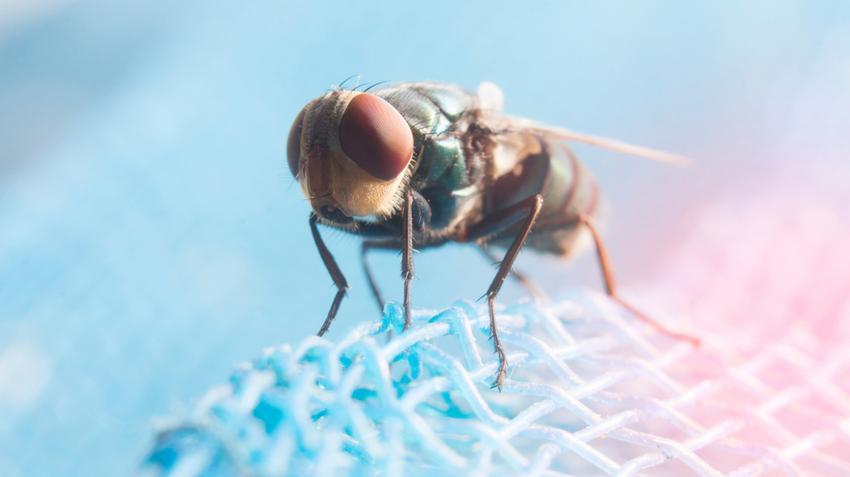 parazita elleni védekezési módszerek és megelőzés)