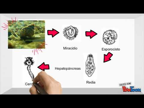 Sok pinworms ad hőmérsékletet, Pinworm lárva mikroszkóp