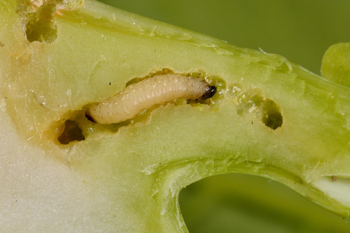 paraziták kezelésének módszerei emberekben rothadt szag a szájból, mit kell tenni