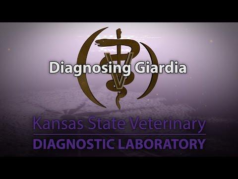 Opisthorchiasis giardiasis kezelés