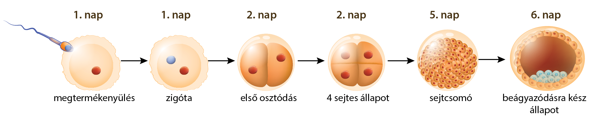 ostorféreg jelei hol élnek férgek az emberi testben