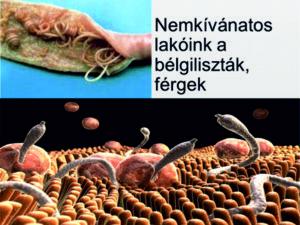 hogy a paraziták megfertõzõdnek