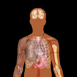 paraziták jelei az emberi tüdőben)