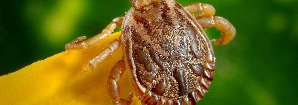 külső paraziták és belső paraziták