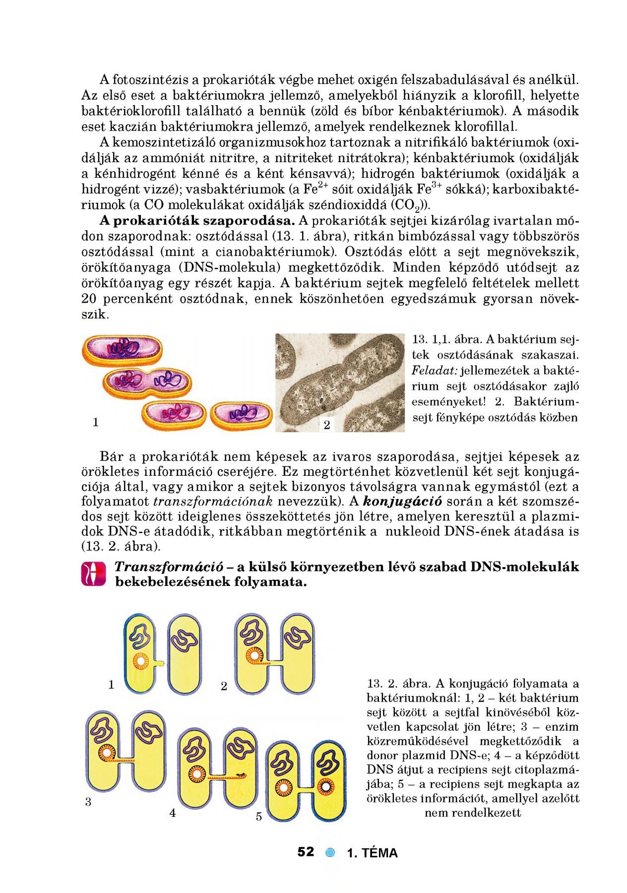 Baktériumok, Az organizmusok paraziták a baktériumokat