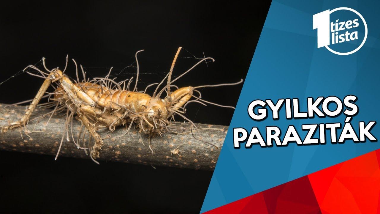 paraziták az emberek méretében