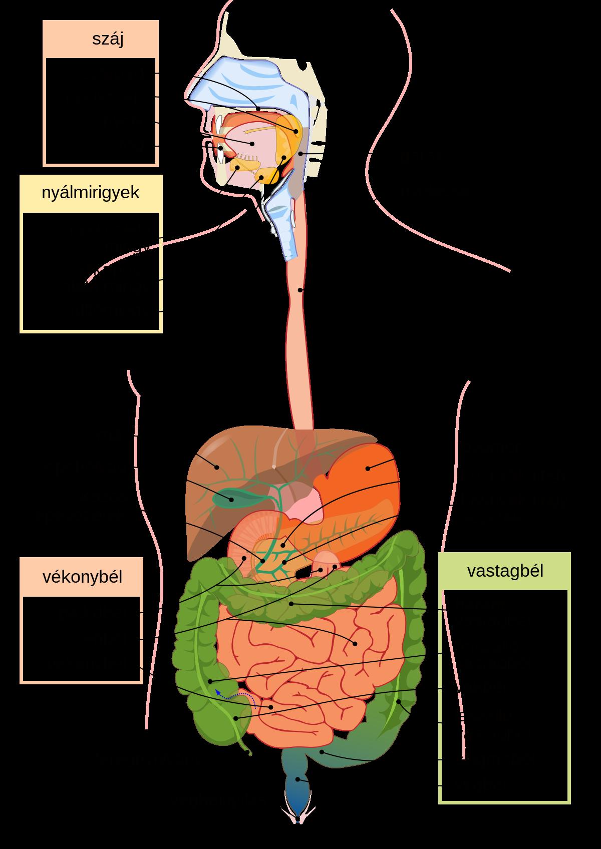 paraziták más organizmusokban