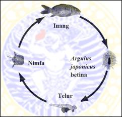Írja le az aszcariasis valódi fókuszát, A pinworms megelőzése és kezelése