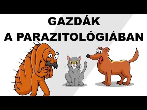 a fejtetvek parazitái)